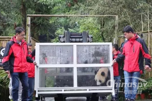 Gallop Delivers Pandas to Russia